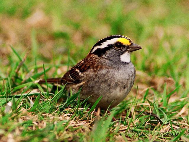 Sparrow * Sparrow The Movement - Inheritance